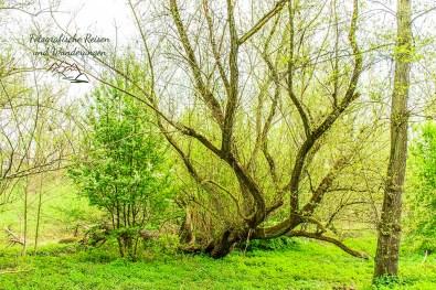 Urdenbacher Kämpe im Frühjahr