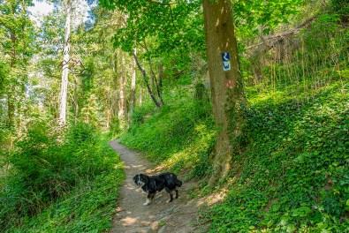 Waldwege kurz vor Melsbach