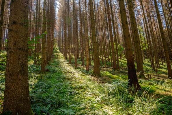 Wandern durch das Olpebachtal