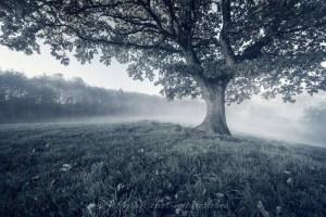 Baum umgeben von Nebel