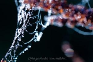 Spinnennetz im glitzernden Morgentau