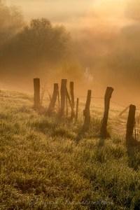 Sonnenlicht auf Wiese im Nebel