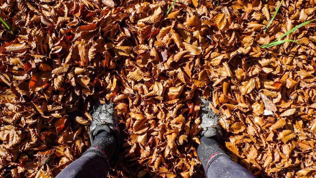 20151024-Autumn Colours, Slivnica-P1440501.jpg