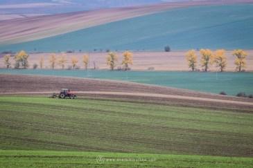 Fot. Aneta Mikulska