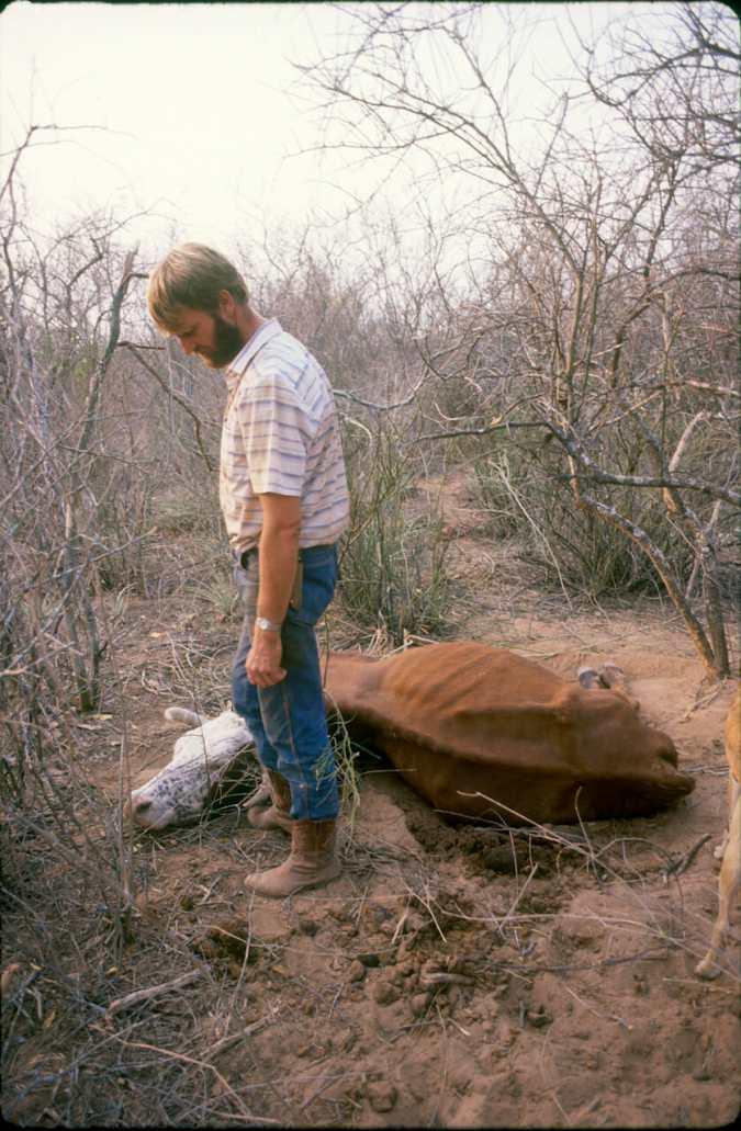 Paraguay, el Chaco, Estancia ganadera, animal, La sequía hace estragos.