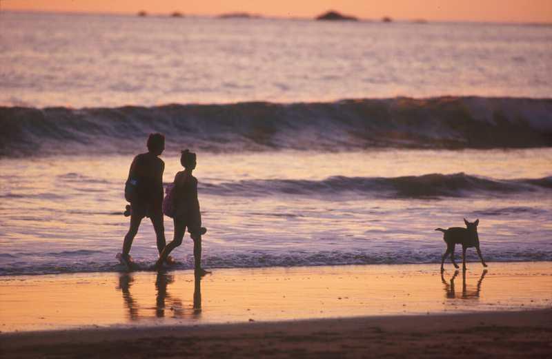 Costa Rica, Playa Manuel Antonio, perros