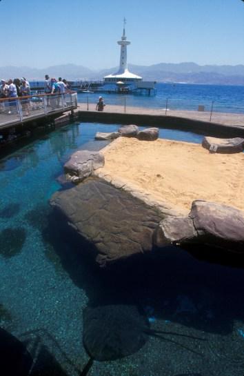 Israel, Eilat, Mar Rojo, observatorio marino, rayas, animal