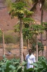 Cabo Verde, Isla Santiago, Pedra Badejo, Plantación Mango, retrato