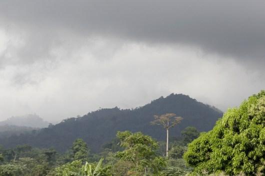 Camerún, Limbe, Monte Camerun