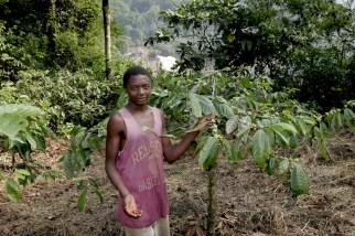 Camerún, Melong, plantación de Café