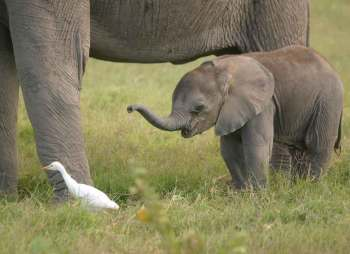 Kenya, Parque Nacional Amboseli elefantes