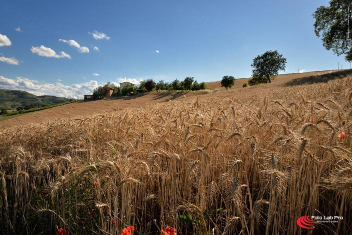 Turismo: Le bellezze naturali in Valsamoggia
