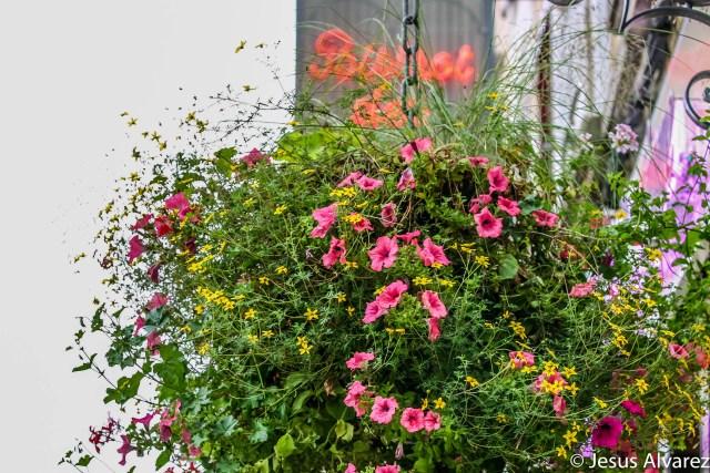 Flores en Auray