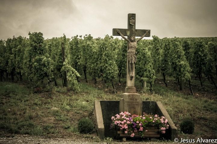 sacred vineyards