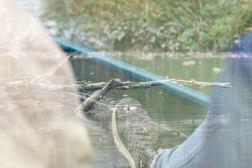 Sejtur på floden
