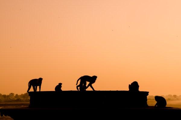 viaje fotografico india vrindavan