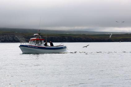 Rejs na wieloryby