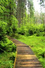 Rezerwat Velké mechové jezírko