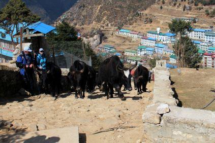 Namcze Bazar - Everest Sherpa Resort