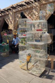Doha - Souq Wakef - Targ ptaków