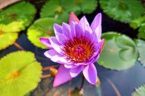 kwiaty Makau