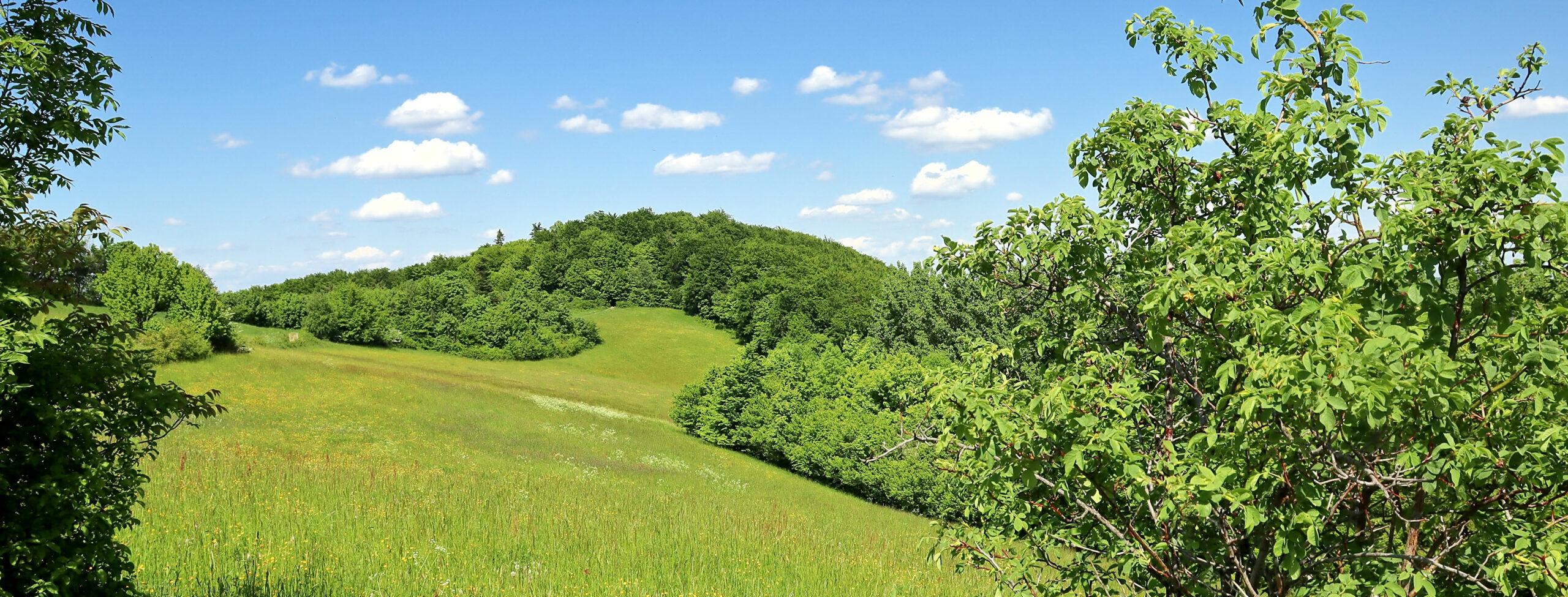 Rezerwat Białowodzka Góra