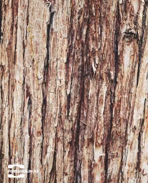 Drvo_kora_foto_pozadine_pixel_web