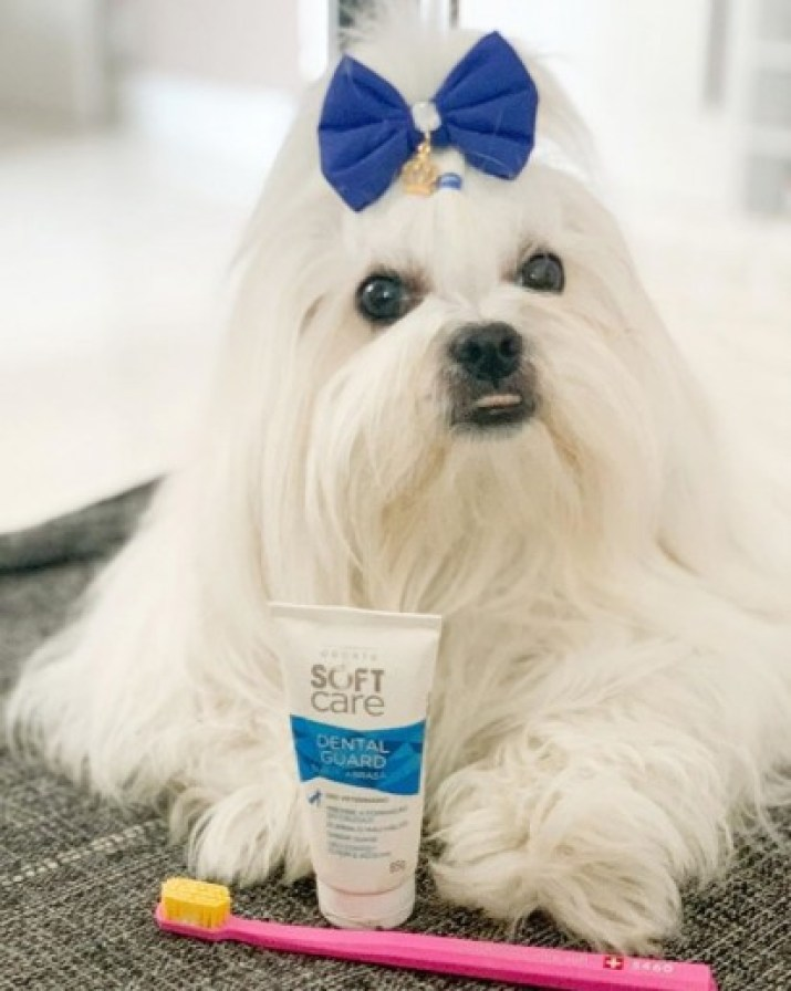 Utilização de produtos de higiene bucal específicos para cães é fundamental. (Foto: Instagram/mellhasa5)