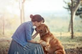 Dar atenção e carinho ameniza o estresse e acalma o animal de estimação. (Foto: Reprodução/Tem Vets)