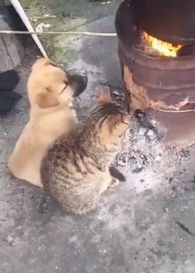 Os dois animais não se importam em ficar sentados um do lado do outro se aquecendo do frio.