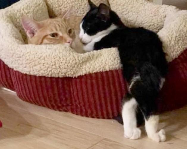 O gatinho Bernard não se acha diferente dos outros gatos, ele está sempre correndo e explorando os cantos da casa.