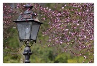 FS7_6909 B primavera