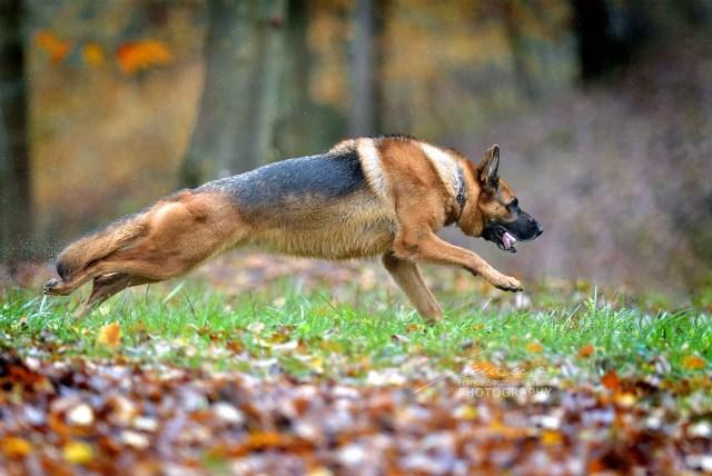 Questa è Olivia, ed ama correre.