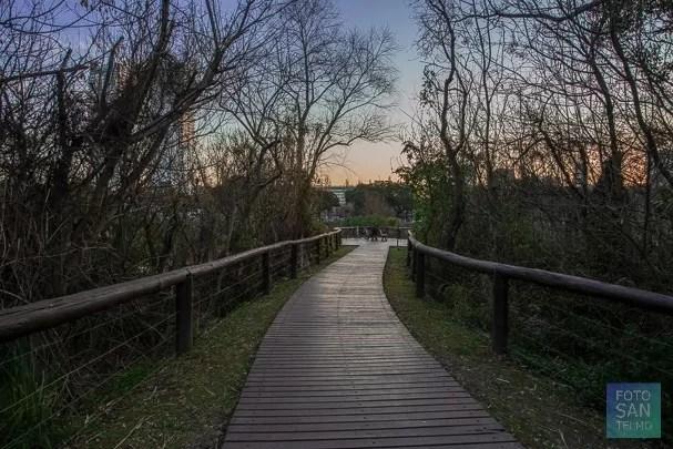 El mejor lugar para hacer fotos en la reserva ecológica de costanera sur en Buenos Aires