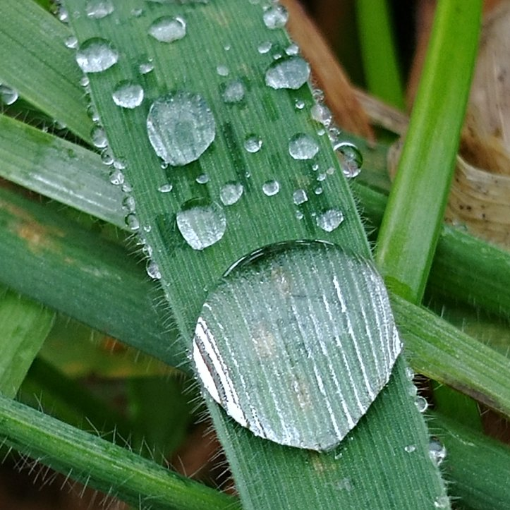 A big and many little raindrops on green grass, macro photo