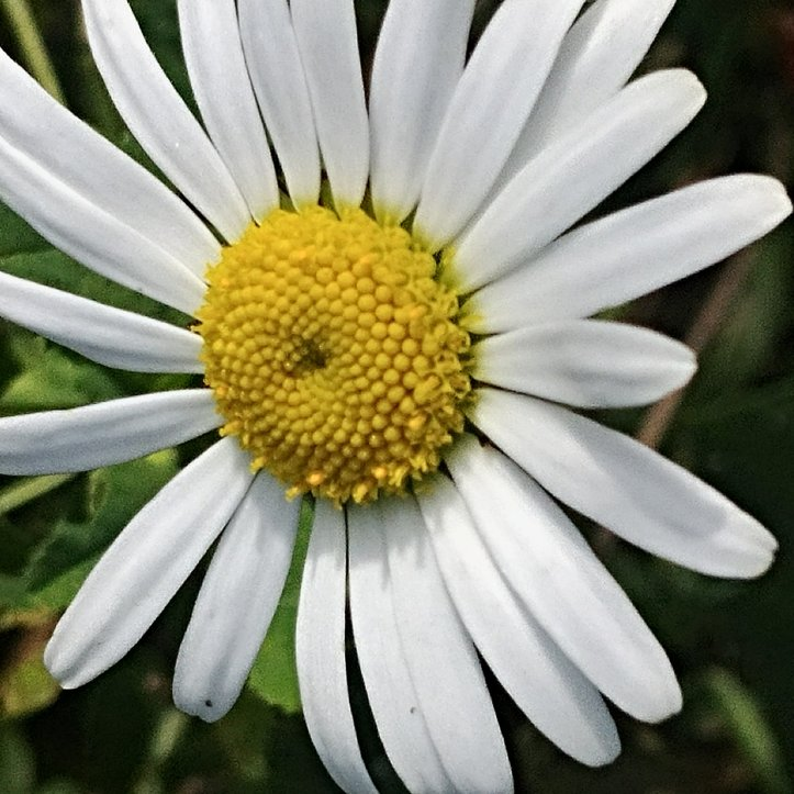 White flower with yellow middle