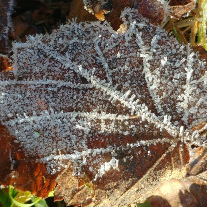 Natural rime ice pattern on brown leaf, macro photo by Fotosbykarin