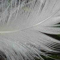 Becky's January squares: words ending with -light / feather-light
