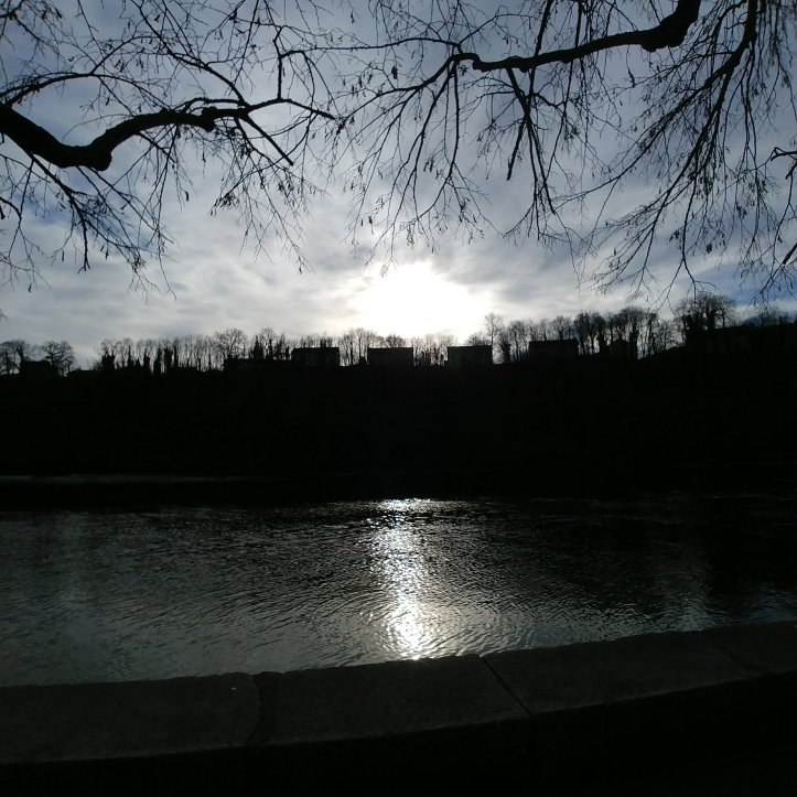 Sun reflecting in the Rhein river surrounded by black tree silouettes