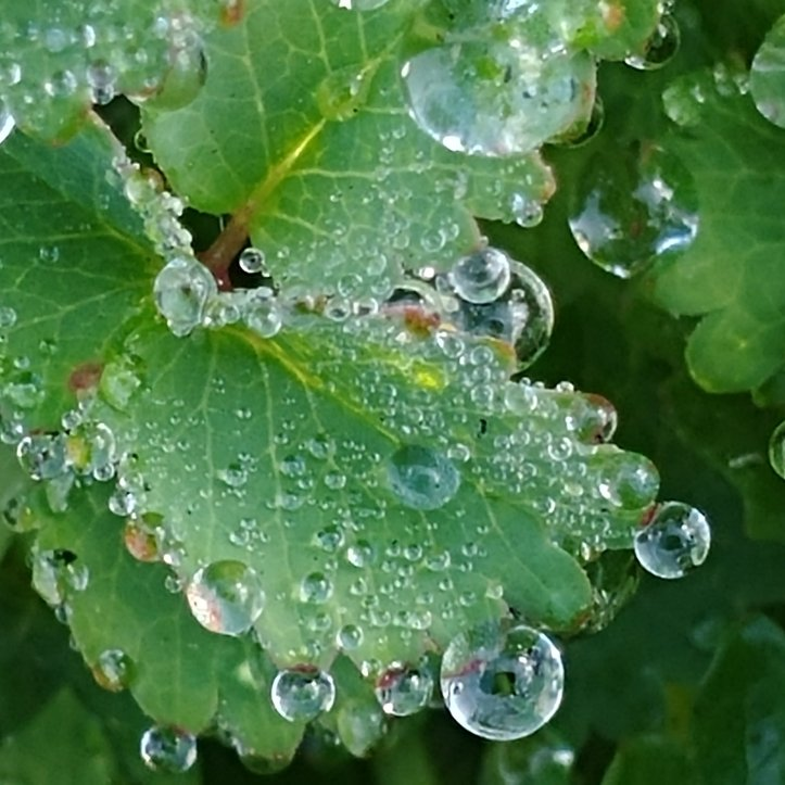 Macro photo of gorgeous water droplets on a green leaf by fotosbykarin