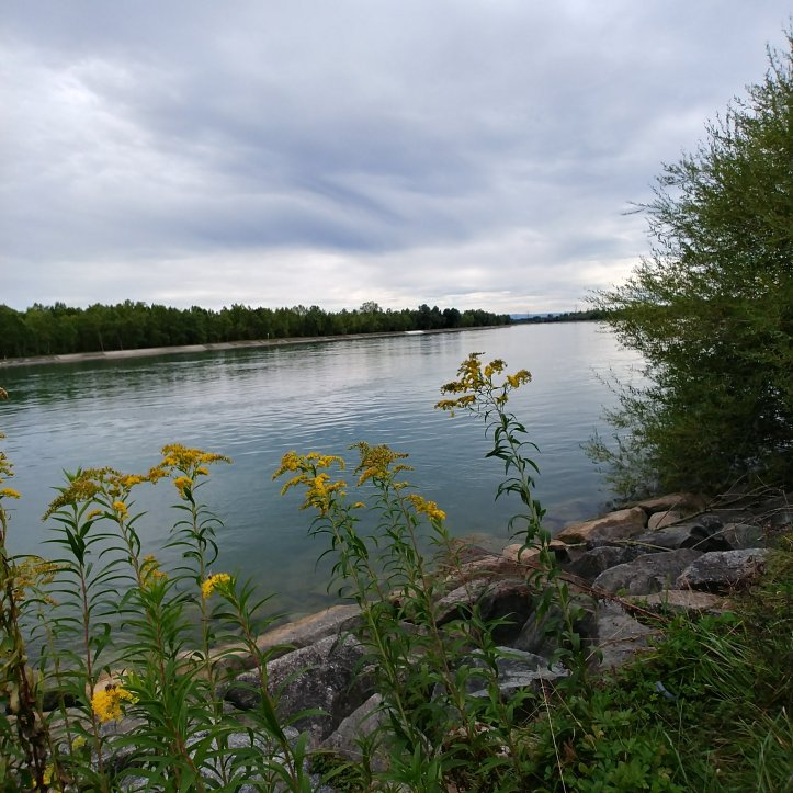 Watching to the french side of the Rhein river, nature photo by Karin Ravasio