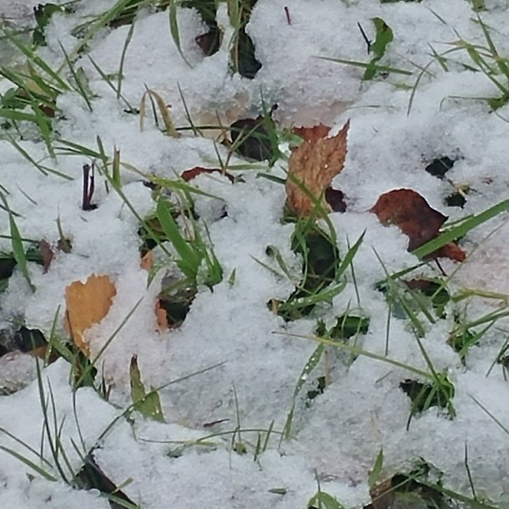 White snow covering green grass and fall leaves, nature photo by fotosbykarin