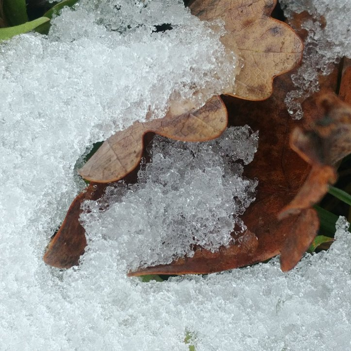 Snow blanket on brown fall leaves, nature photo by fotosbykarin