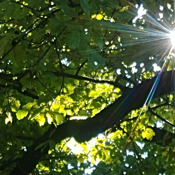 Trees with green leaves and sunrays, nature photo by fotosbykarin