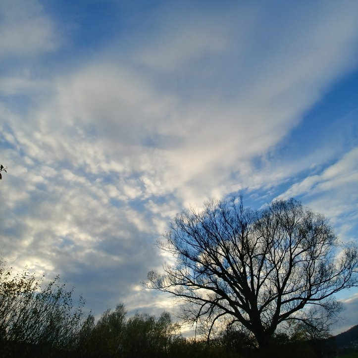Black tree silouette, blue sky and beautiful clouds, nature photo by fotosbykarin