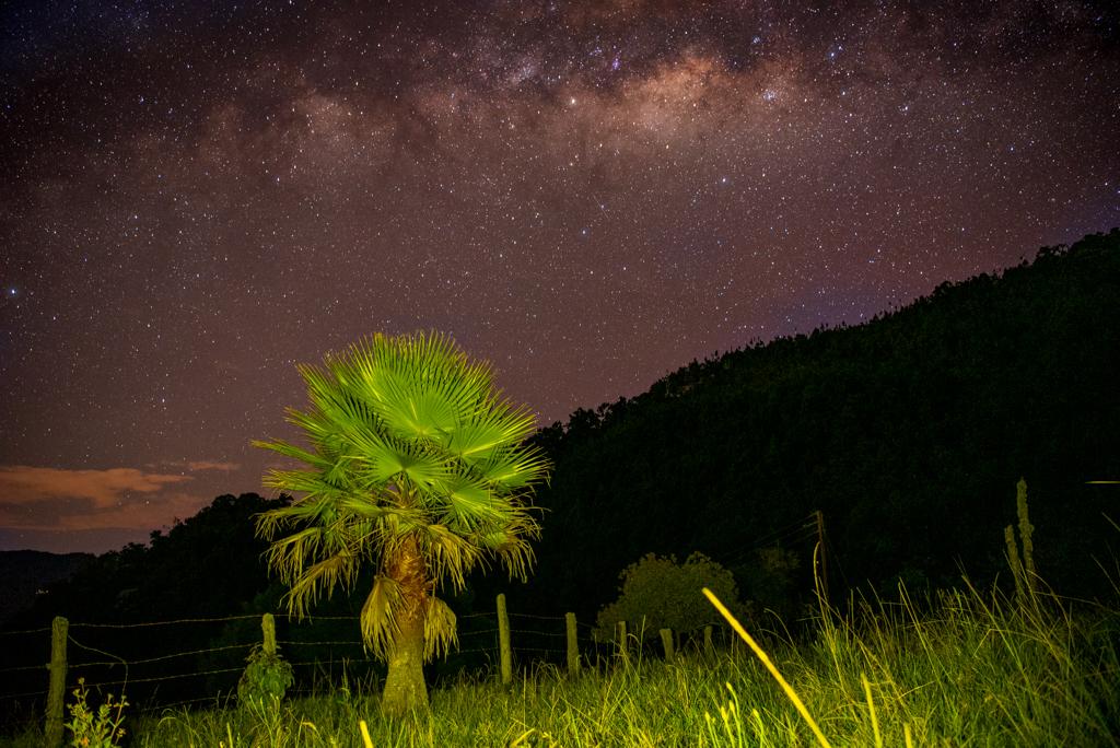 Palma iluminada con linterna y via lactea