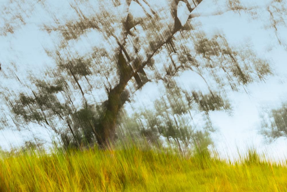 paisaje en movimiento
