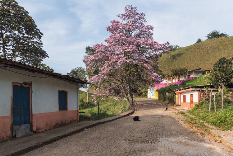 via al liceo jerico con guayacán