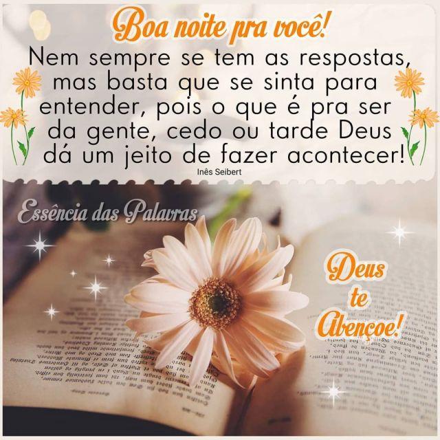 Boa noite pra você com flor e resposta de Deus