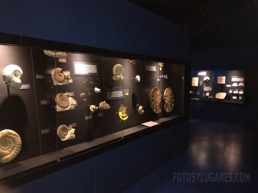 Museo de Dinópolis